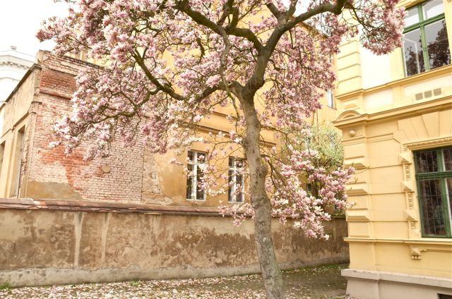 Spring in Görlitz